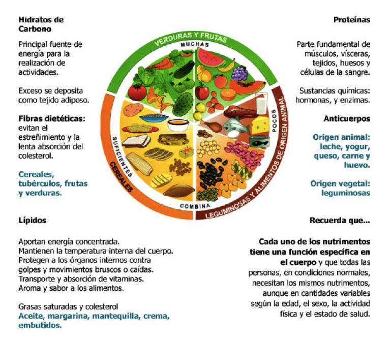 Tip: Plato del bien comer y pirámide nutricional